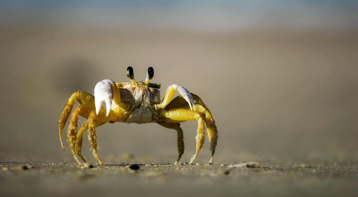 Crab - Foto: © Benjamin Madeira / RUL2C/Instagram