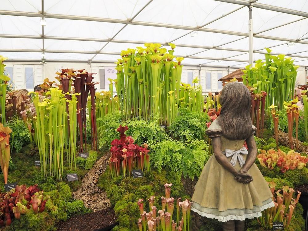 Plantas carnívoras exhibicion