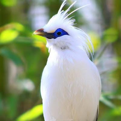 أجمل خلفيات طيور الزينة