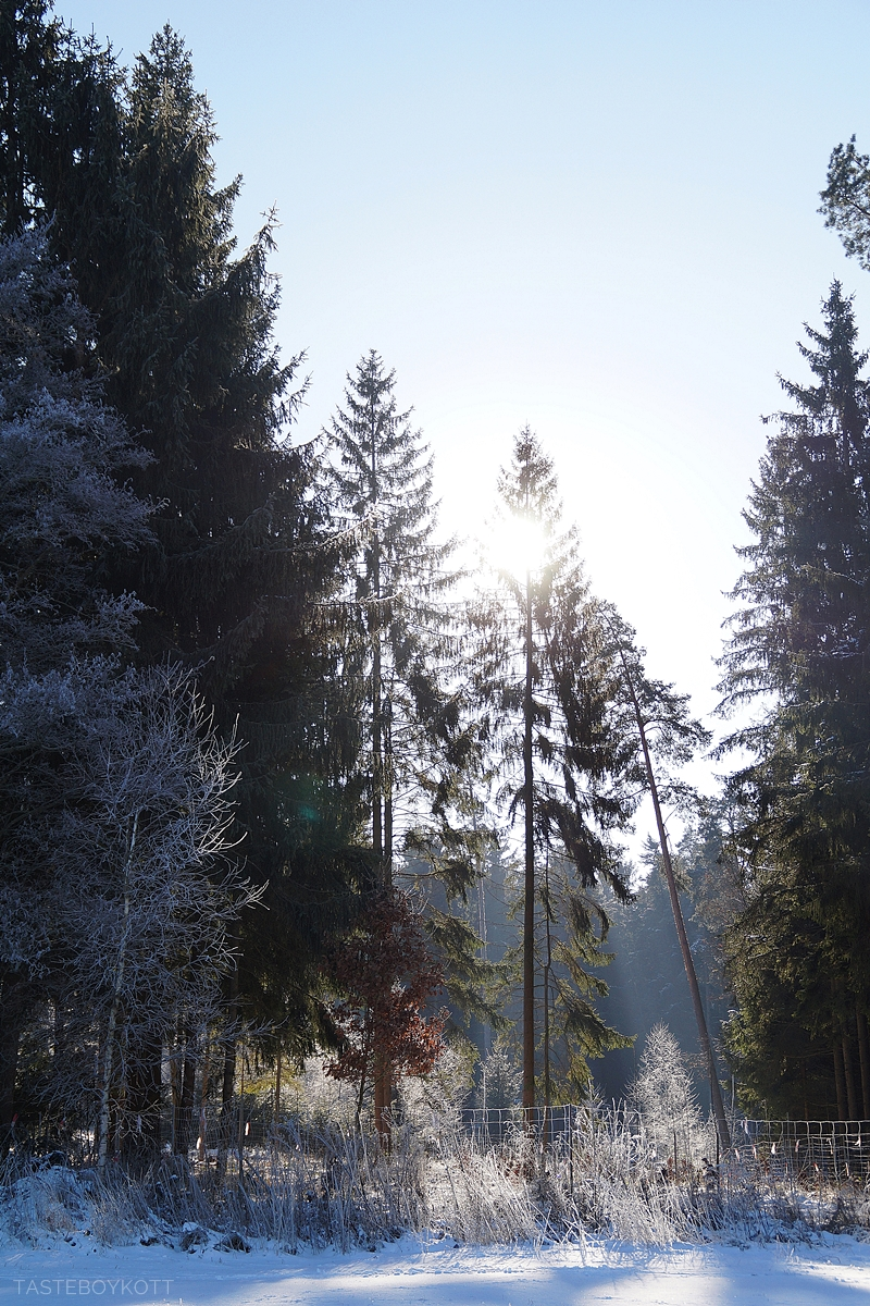 Sunny snowy winter day in the forest