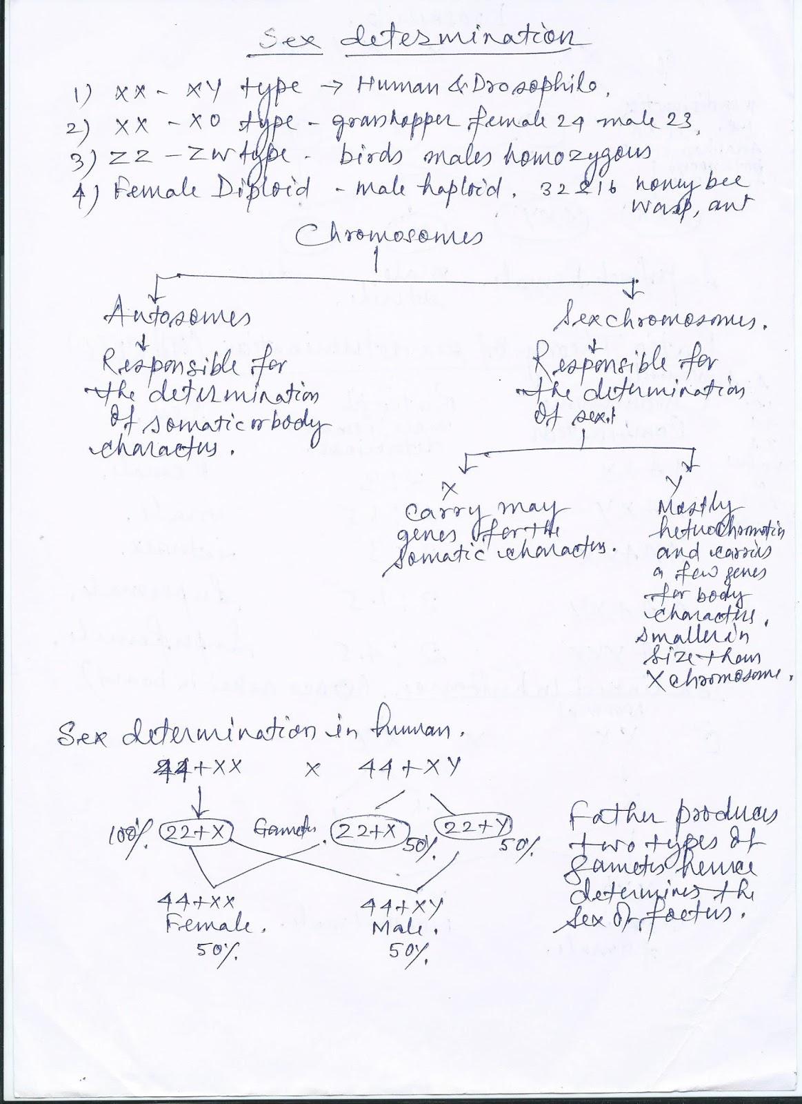 worksheet Sex Linked Inheritance Worksheet mandals desk sex linked inheritance class xii xii