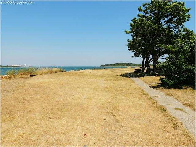 Georges Island: Flora