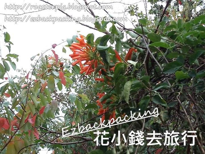 青衣公園賞花