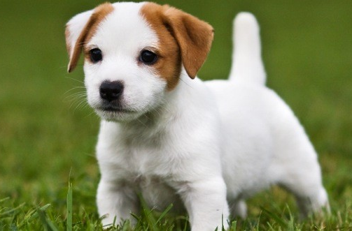 Frasi sui cani - Colorazione immagine di un cane ...