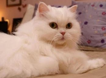 Memelihara Kucing Menyehatkan atau Membahayakan