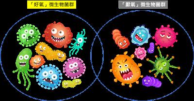化糞池微生物示意圖