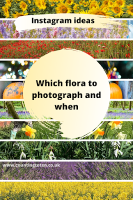 Which flora to photograph and when for instagram in front of ideas of flowers