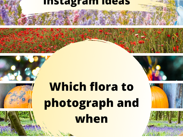 Seasonal Instagram Photography Ideas - What to take photos of and when