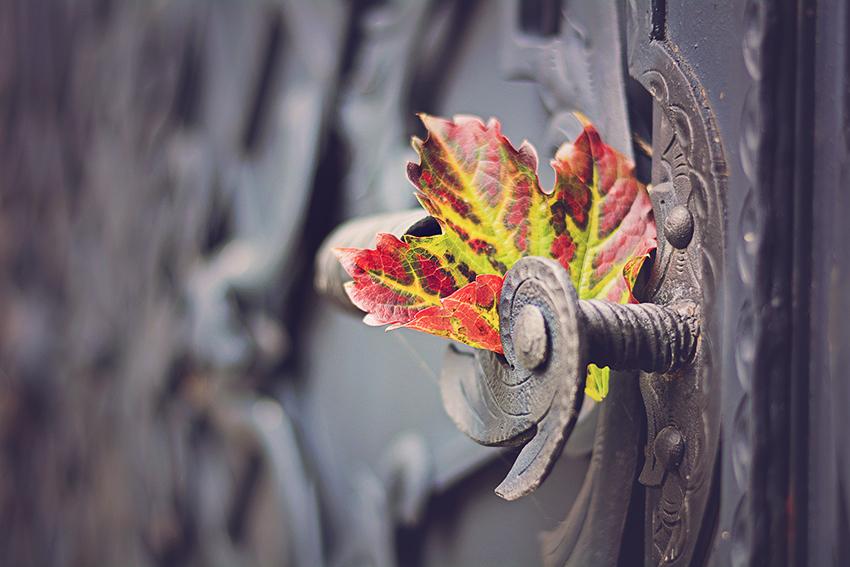 43/52 - Podzim v detailech