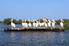 Parc, Djoudj, visite, Saint-Louis, patrimoine, mondial, Unesco, tourisme, sauvage, oiseaux, réserve, île, protection, environnement, nature, écosystème, LEUKSENEGAL, Dakar, Sénégal, Afrique