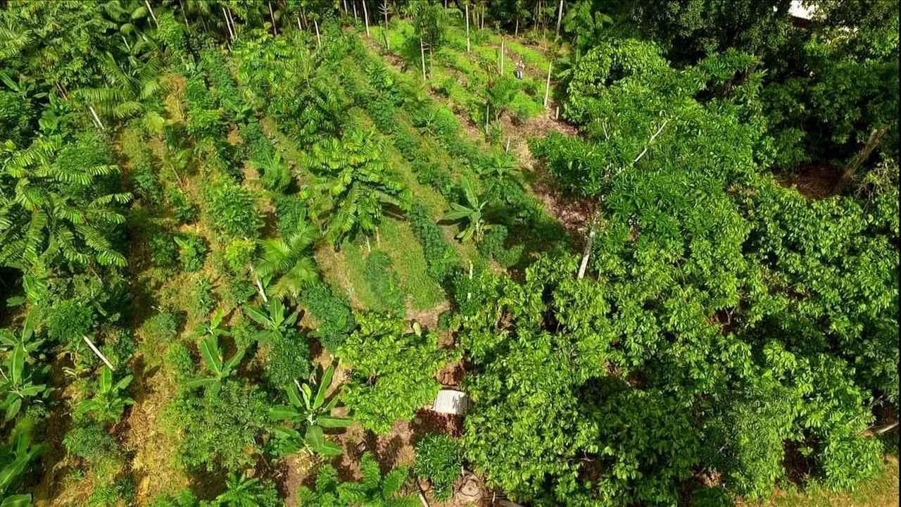 Agricultura Sintrópica