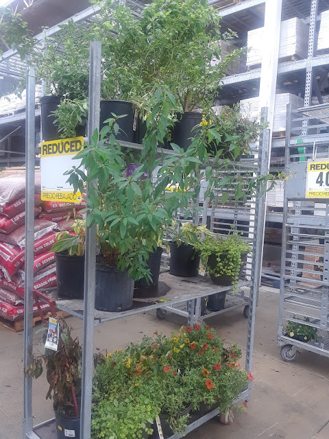 plant clearance at Lowe's