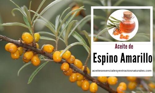El aceite de espino amarillo es un antiarrugas natural, además es rico en Vitamina C y Omega 7