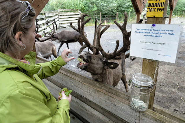 Peg Feeds a Reindeer in Ketchikan, Alaska