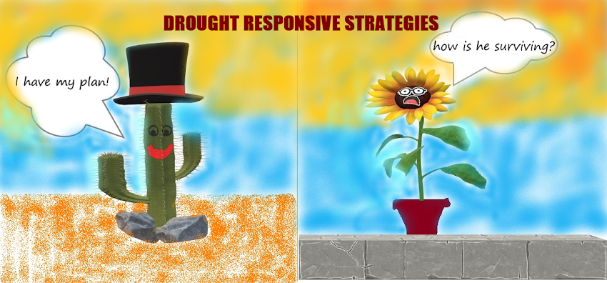 Planting strategies in the dry climate