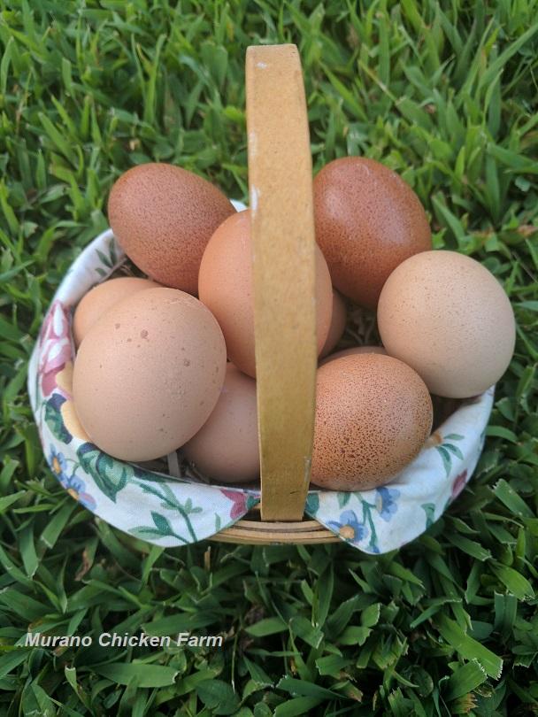 Selling fresh eggs - Murano Chicken Farm