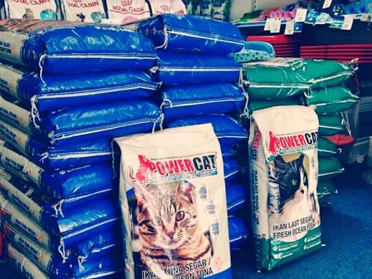 Download 93+  Gambar Vitamin Kucing Persia Terbaru Gratis