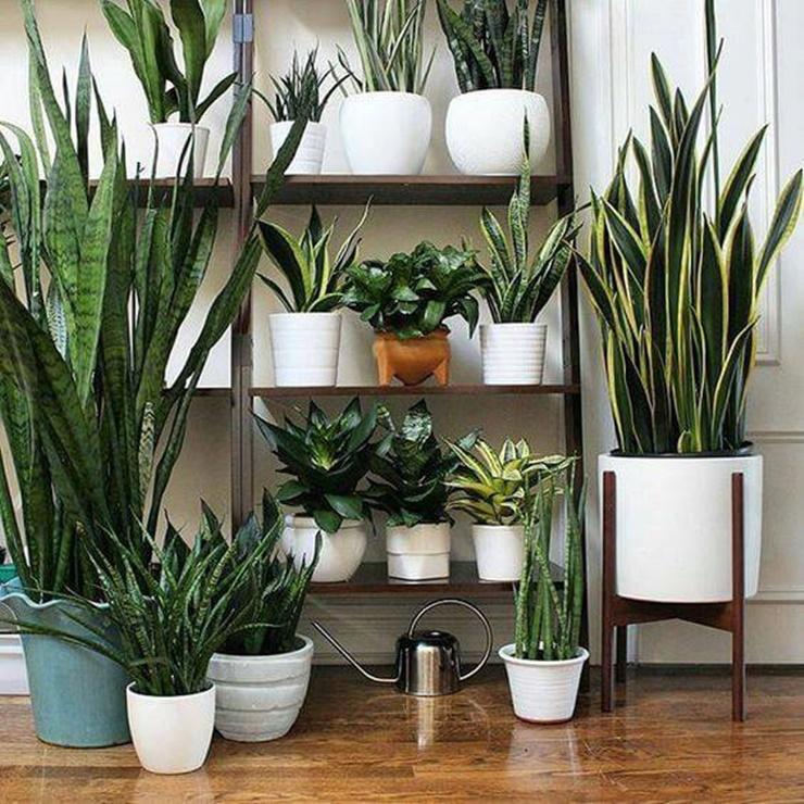 As plantas mais fáceis para ter em apartamento