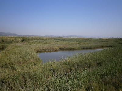 La Marjal dels Moros, Humedal perteneciente a Puçol y Sagunto, Comunidad Valenciana, España