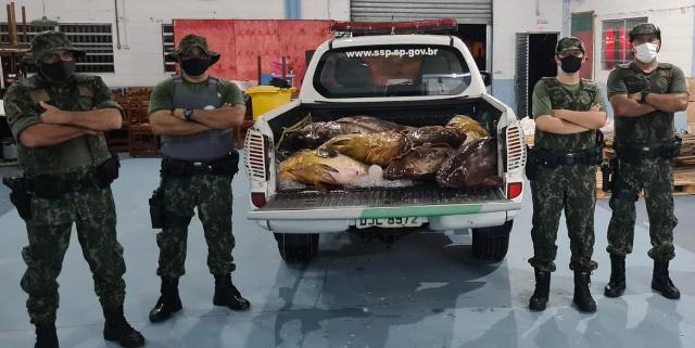 POLICIAMENTO AMBIENTAL MARÍTIMO FLAGRA GRANDE QUANTIDADE DE GAROUPA ARMAZENADA EM FREEZER EM IGUAPE
