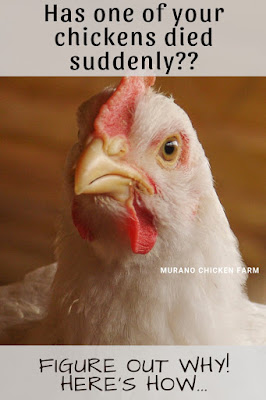 Sudden death in chickens causes