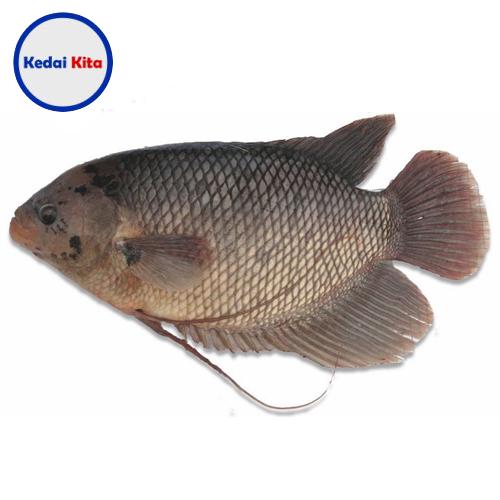 Ikan Gurame 500 Gram