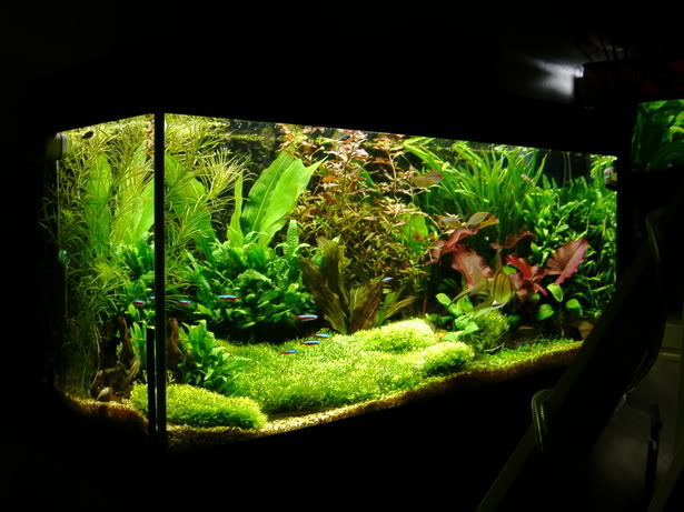 Hướng dẫn trải nền bằng rêu Ricca thủy sinh - chiêm ngưỡng thành quả
