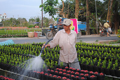 Nông dân Sa Đéc chuyển sang trồng nhiều cây công trình