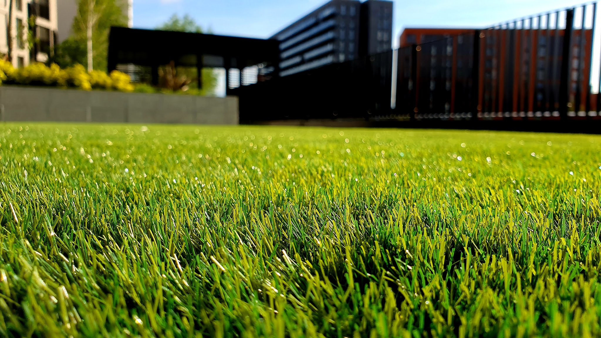 How to plant grass seed on the existing lawn