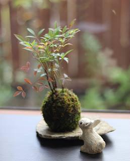 苔玉(作った作品の確認)石皿にのせたナンテンとウサギの人形
