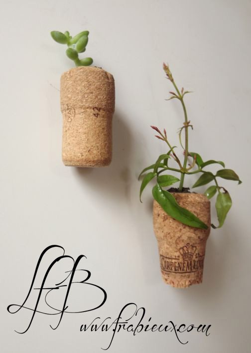 mini-plante-dans-un-bouchon-de-liege