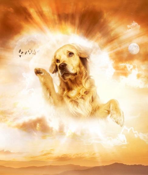 http://1.bp.blogspot.com/-XnAqv6twaqI/UPpWHvYZEFI/AAAAAAAAA1s/_j61zeRZ_Fc/s1600/playing-dog-wth-god.jpg
