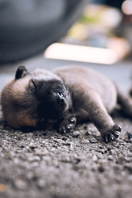 cute baby dog puppy with eyes closed and sleeping, shot with Nikon Z50 35mm