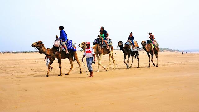 На фото - караван верблюдов на побережье океана в Эс-Сувейре, Марокко