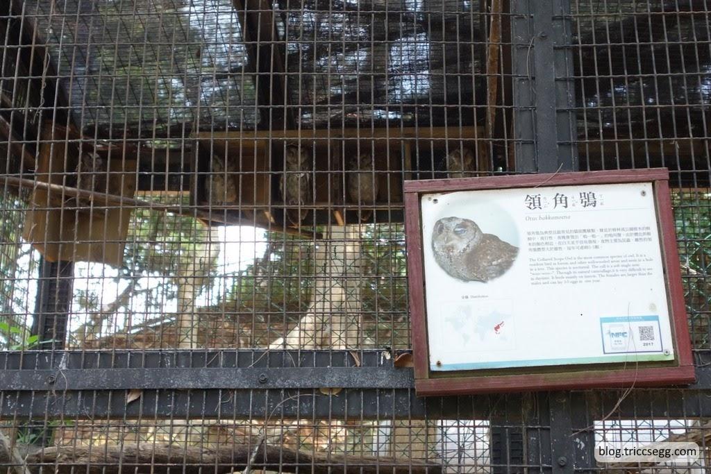 新竹市立動物園(67).JPG