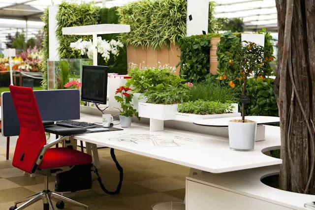 أسباب تشرح لماذا يجب أن تضع النباتات في مكان عملك