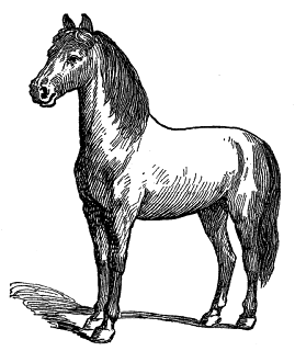 horse illustration download digital