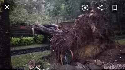 Breaking News: Satu orang Warga Pondok Tinggi Dikabarkan Tertimpa Pohon di RKE