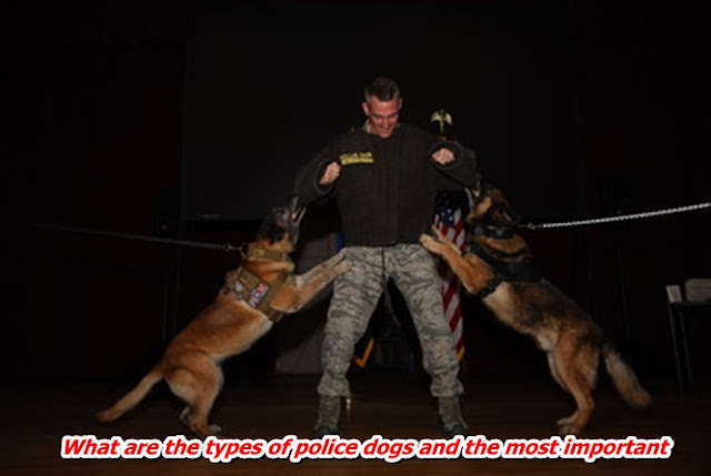 What are the types of police dogs and the most important