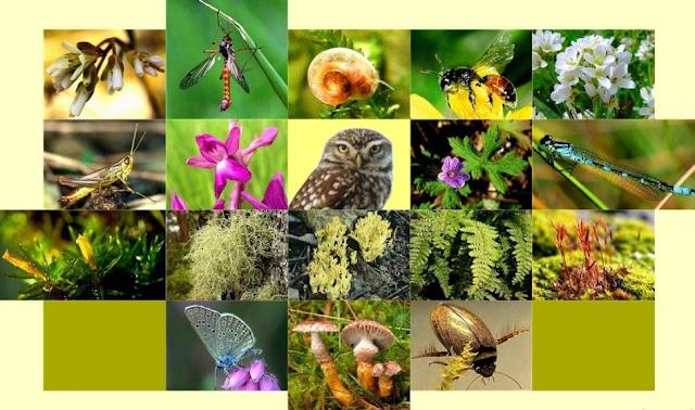 Pengertian Klasifikasi Makhluk Hidup, Tujuan, Manfaat dan Sistem Klasifikasinya