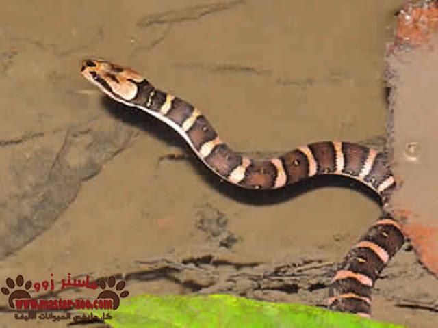 تعرف على أشهر ثعابين الشجر والماء water-tree snake
