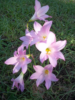 Flores silvestres de Primavera (Foto: Ronald Stresser)