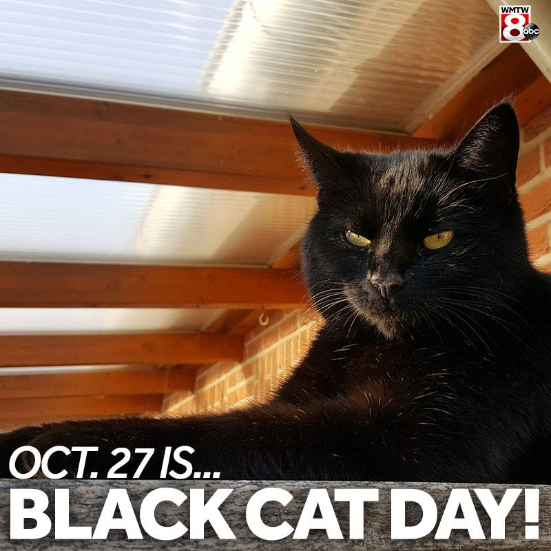 National Black Cat Day Wishes for Whatsapp