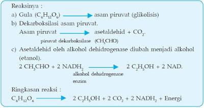 Hasil gambar untuk soal tentang glikolisis pandani