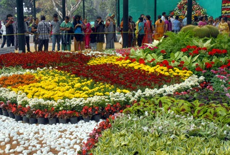 Bangalore,exhibition flowers,beautiful,nature images,flowers,flowers exhibition