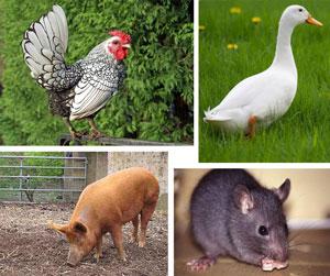 Contoh hewan omnivora pemakan segala