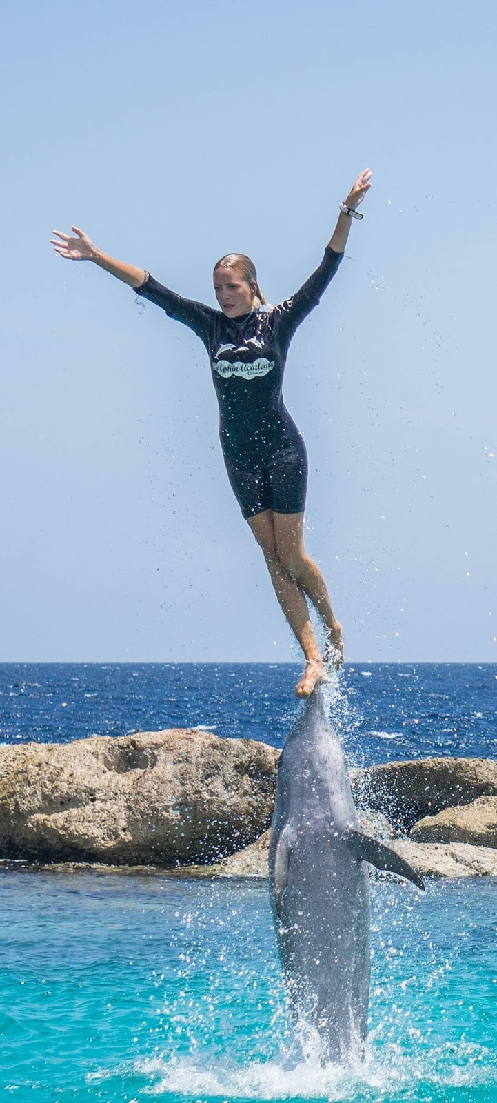 Picture of an amazing dolphin stunt.