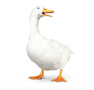 Aflac raised dividend second time in 2020