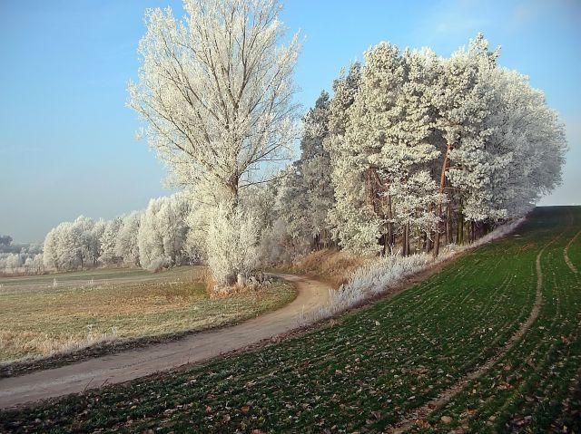 zimowe krajobrazy, biało, drzewa, przyroda