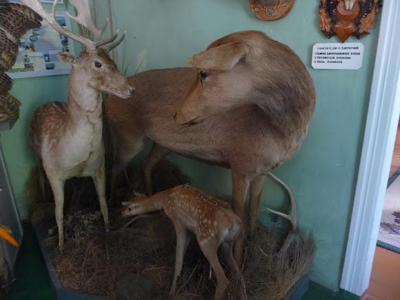 Геническ. Краеведческий музей. Флора и фауна